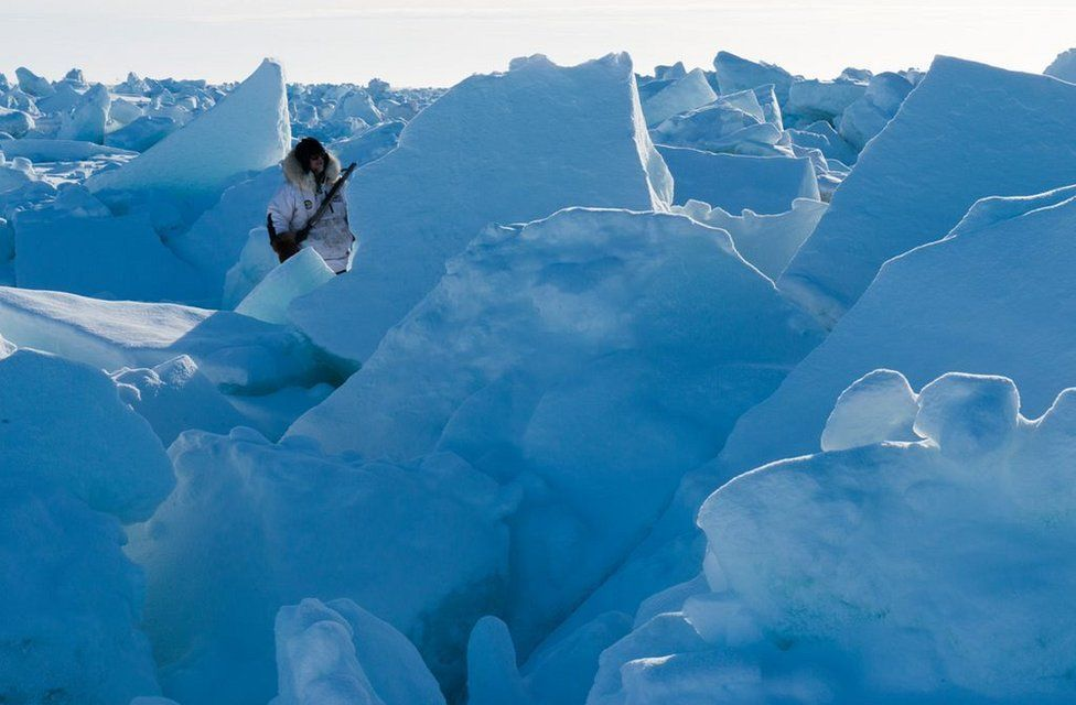 Keeping watch for polar bears