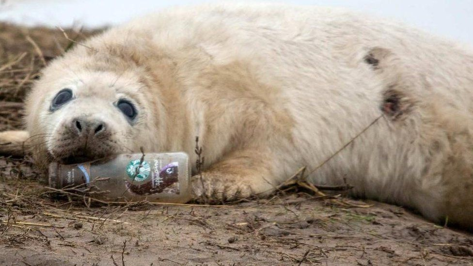 Seal with bottle in mouth
