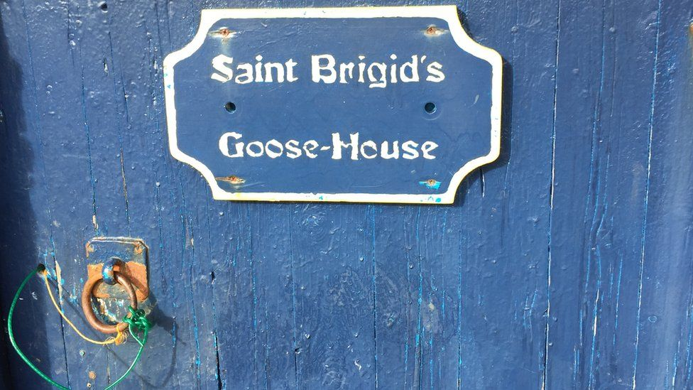 Goose house door