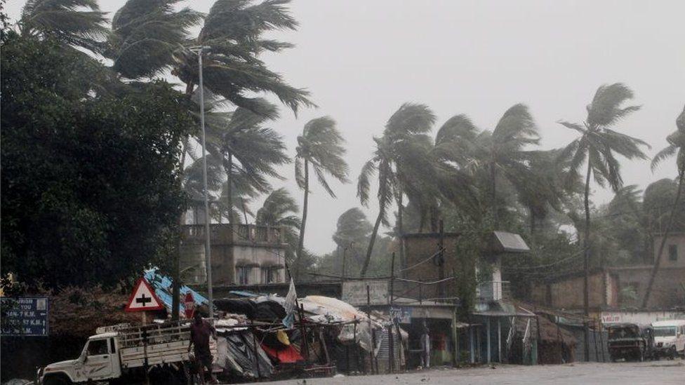 Heavy rain bends palm trees on the Orissa coast
