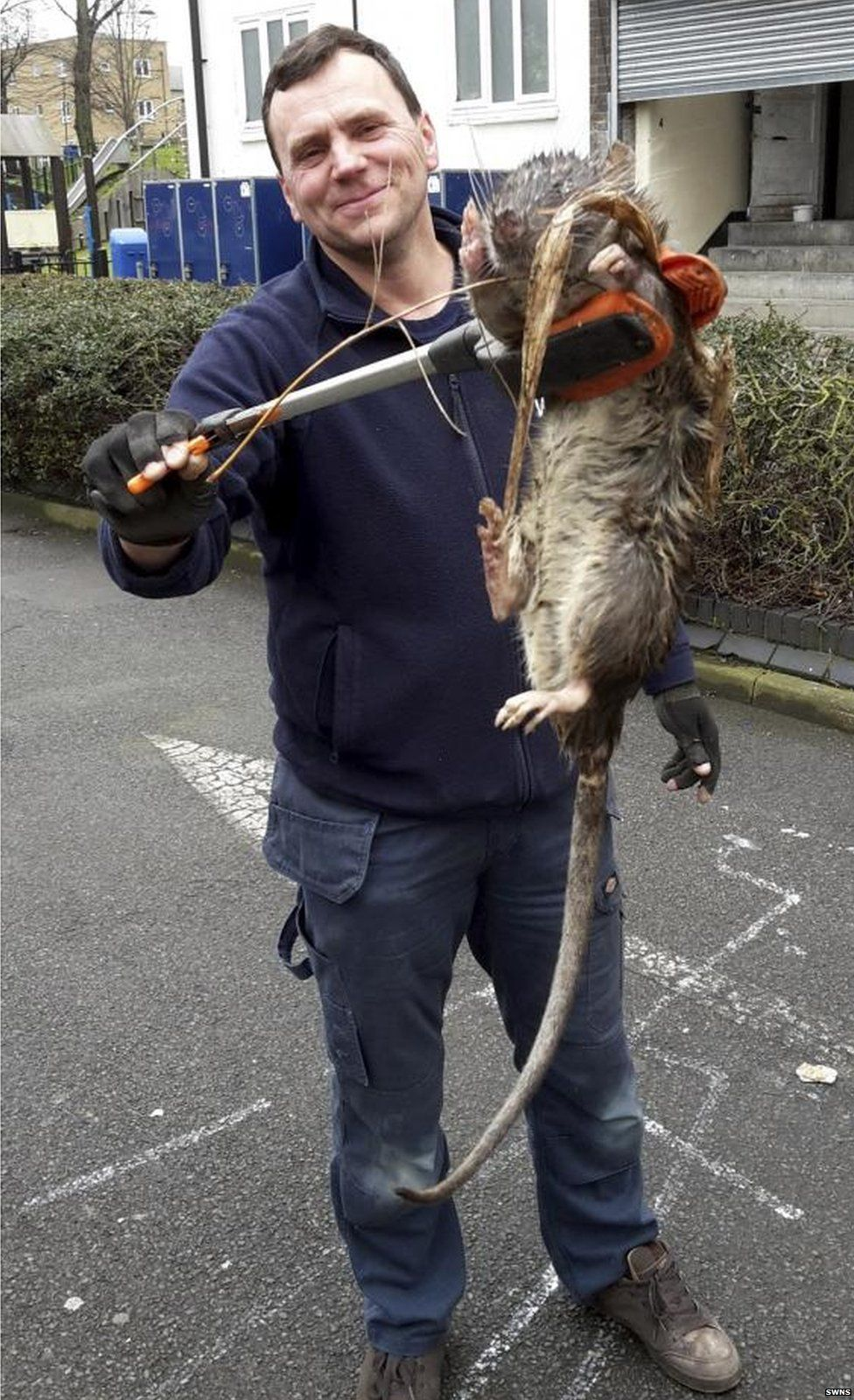 Hackney rat