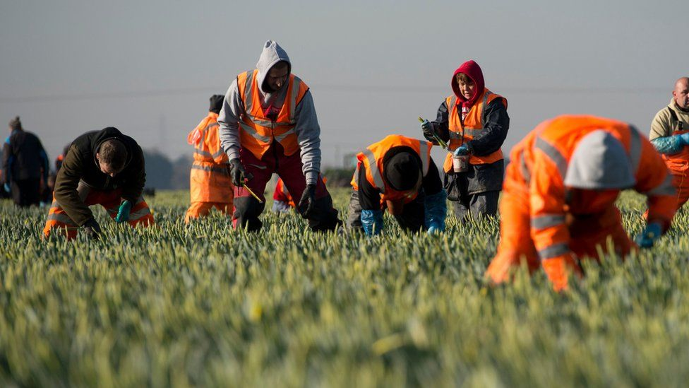 Migrant workers in field