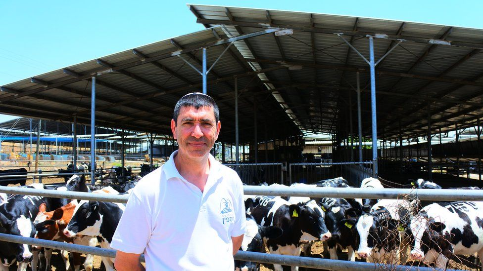 Paul Barel, an agricultural worker in Golan, with some cattle