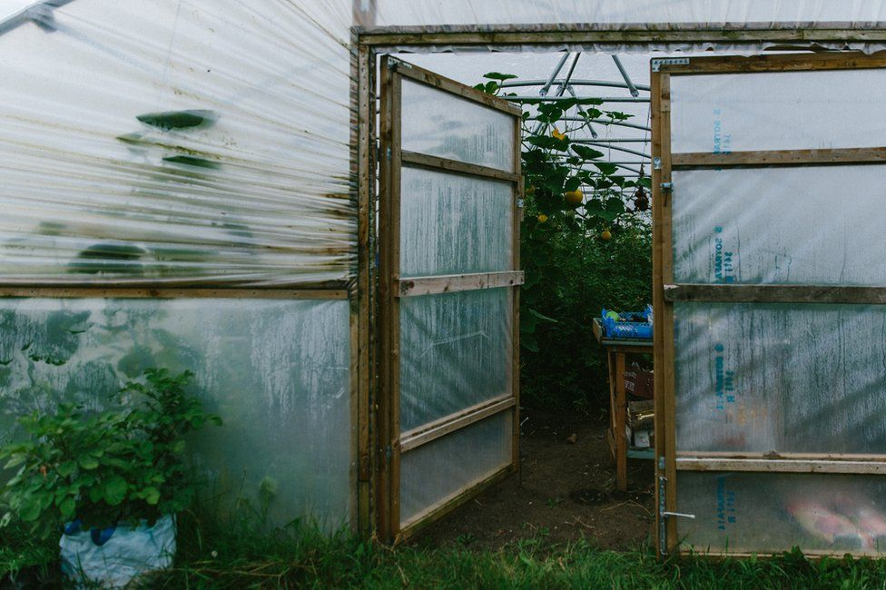 The entrance to the polytunnel with plants bearing fruit inside