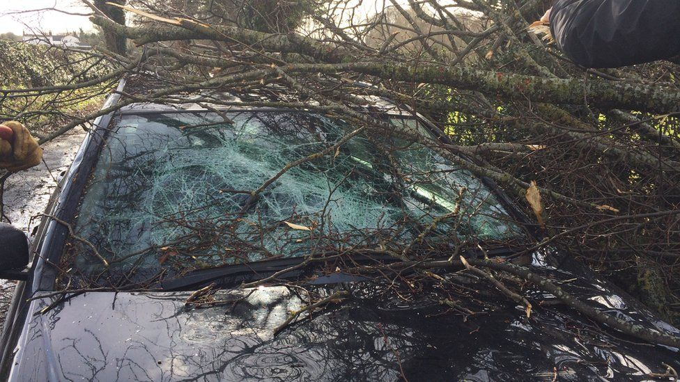 A tree damaged the car of cameraman Ian Friswell as he was filming in Gresford, Wrexham
