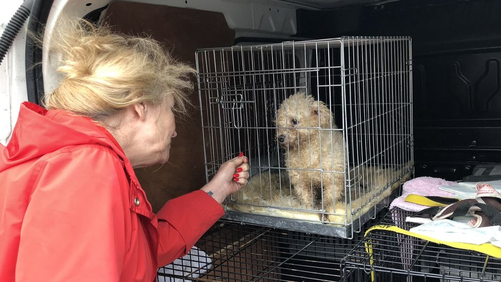Photo of Eileen Jones with a rescued Bichon Frise