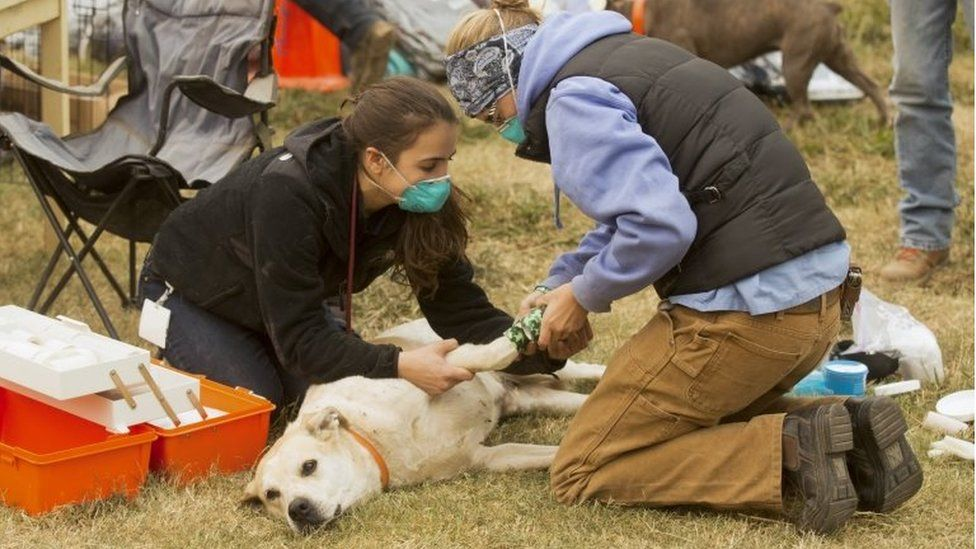 A dog is banded up by college students