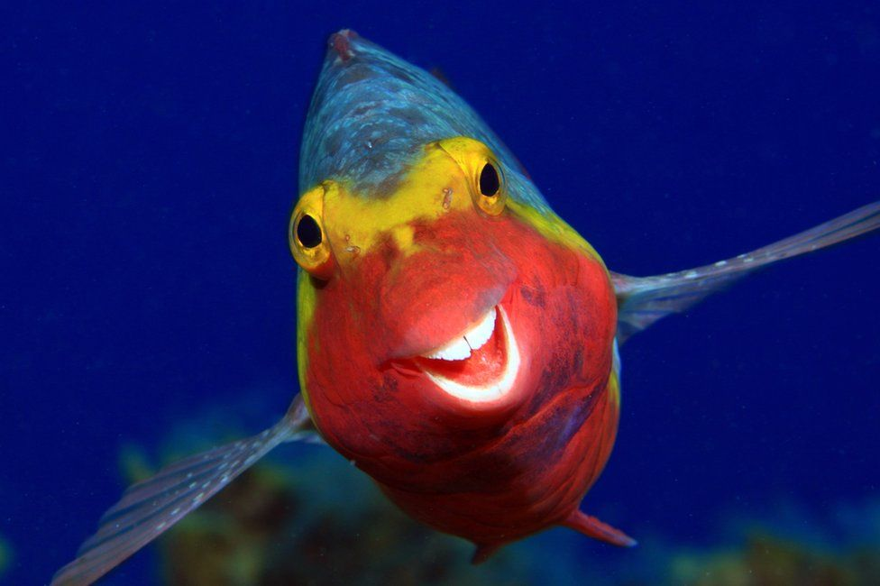 A fish appearing to smile at the camera