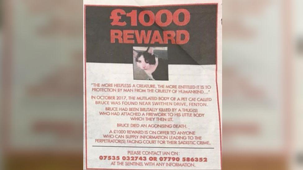 Cat reward advert