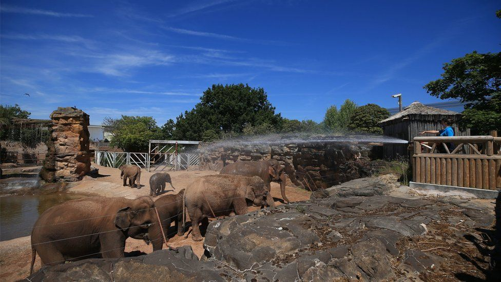 Elephants at Chester Zoo, being sprayed with water in the heat