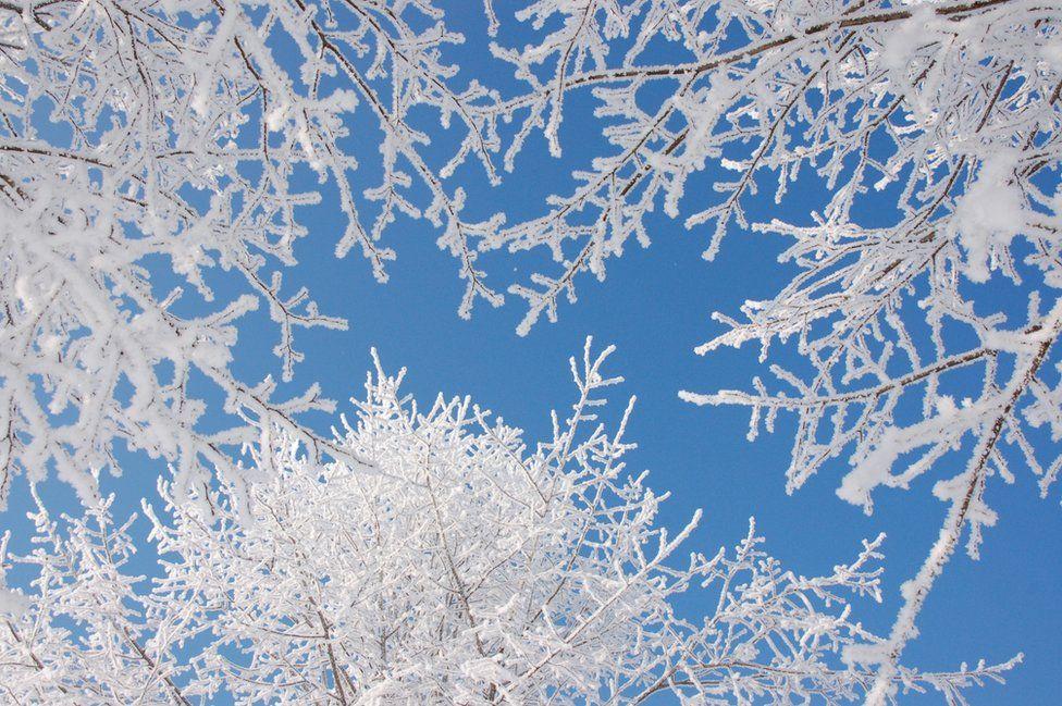 Crisp white branches against a blue sky