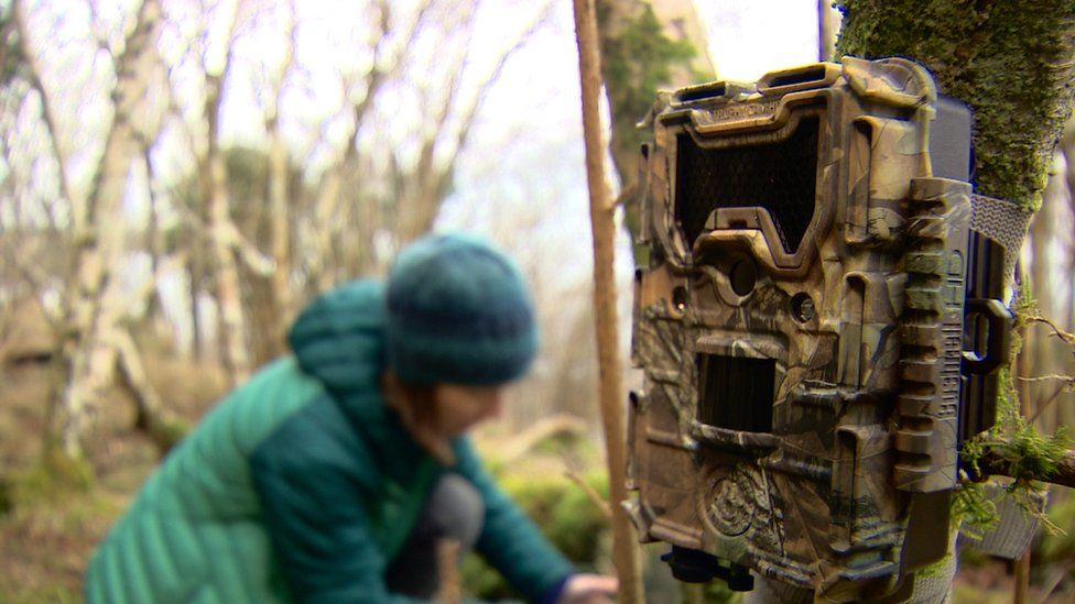 About 150 camera traps have been laid around Morvern to better understand the animals' movements