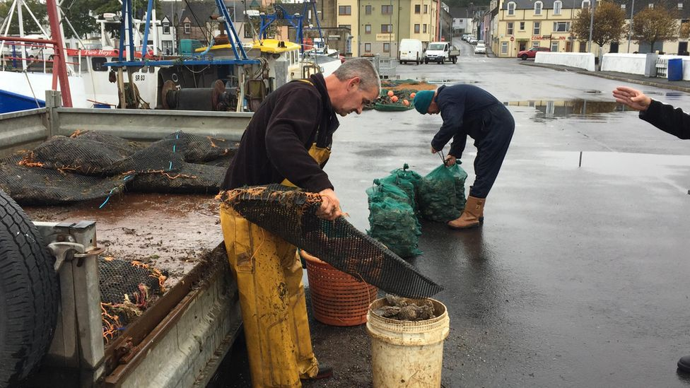 Oyster fisherman bagging oysters