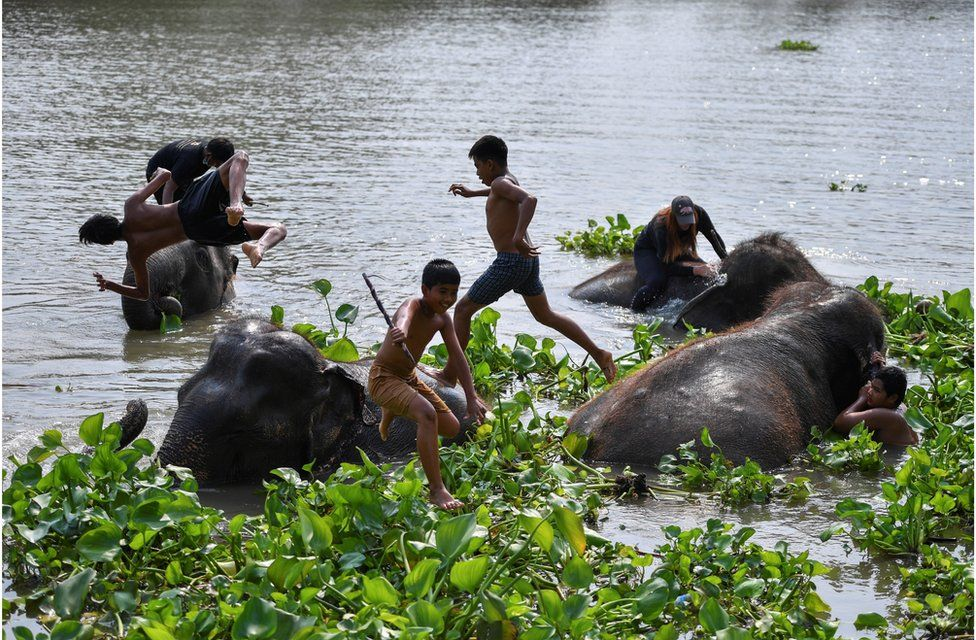 Children play with elephants in a river