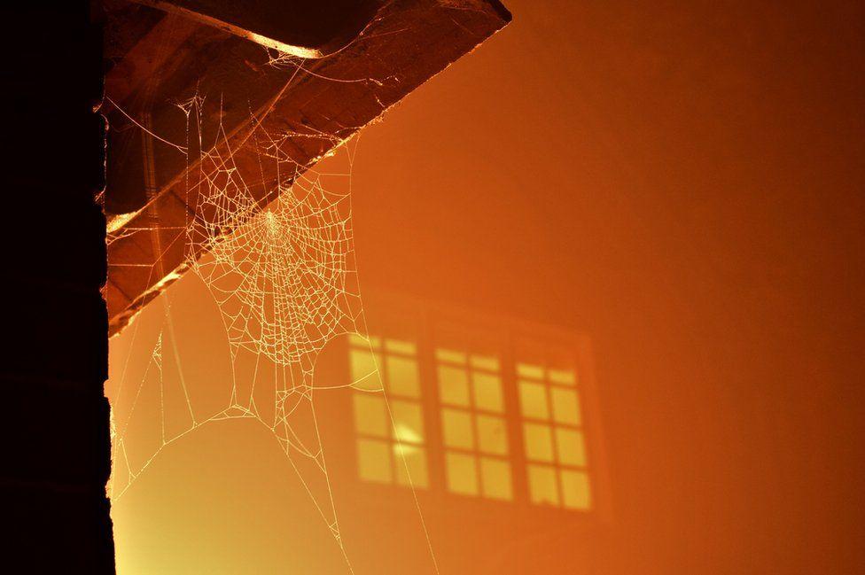 A cobweb is bathed in orange light