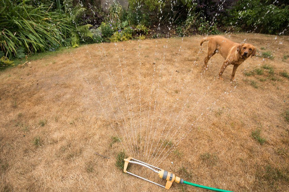 A dog stands besides a hosepipe sprinkler in a garden of a house in the village of Priston.