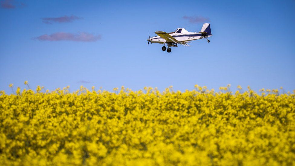A plane drops poisoned pellets for mice as it flies over a paddock containing a canola crop on a property near Gunnedah, New South Wales, on 24 August 2020 in Australia.