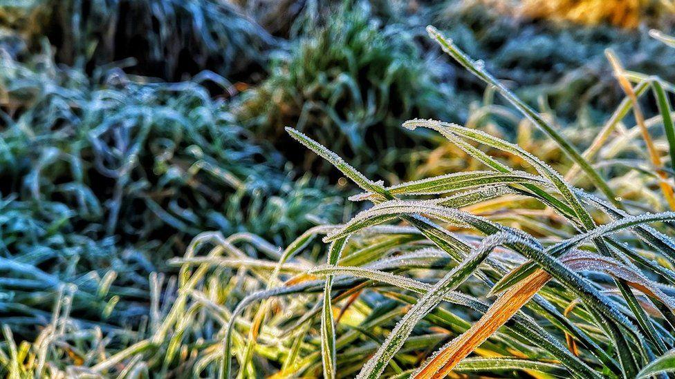 Frosty blades grass in Shropshire