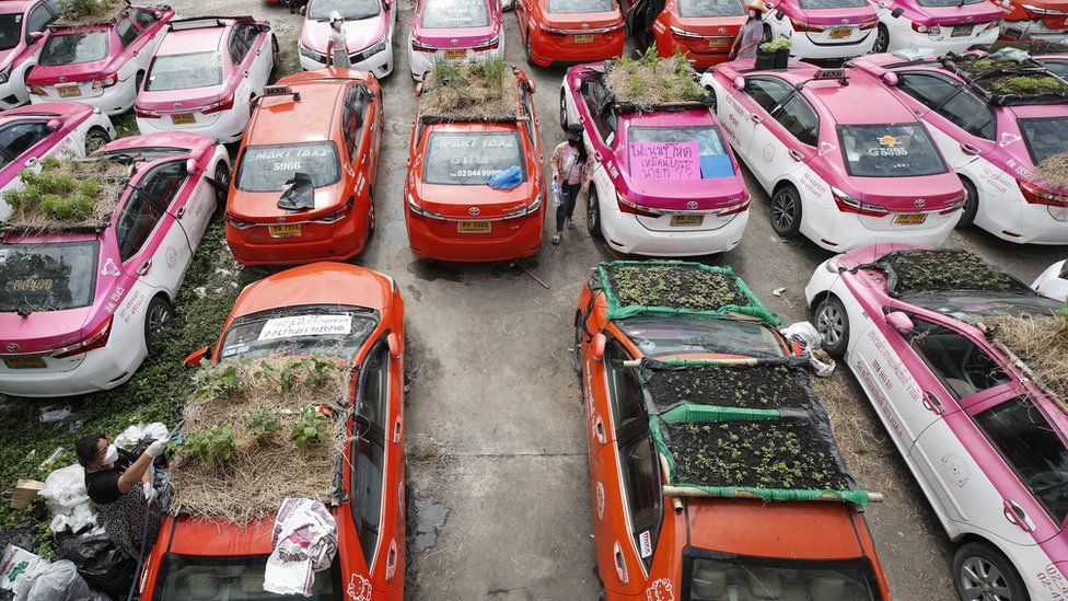 A sea of vegetables grow on the roofs of abandoned taxis in Ratchaphruek Taxi Cooperative in Bangkok, Thailand.