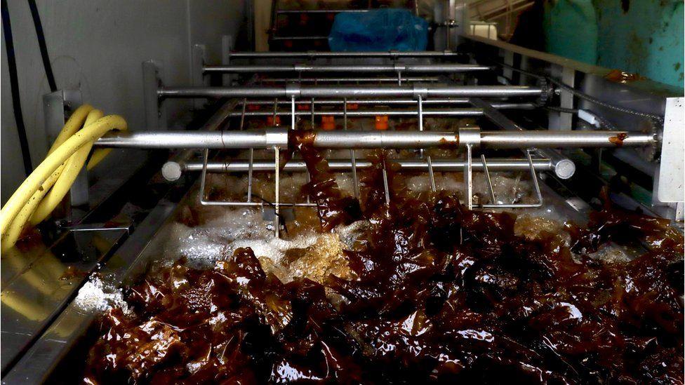 Seaweed processing