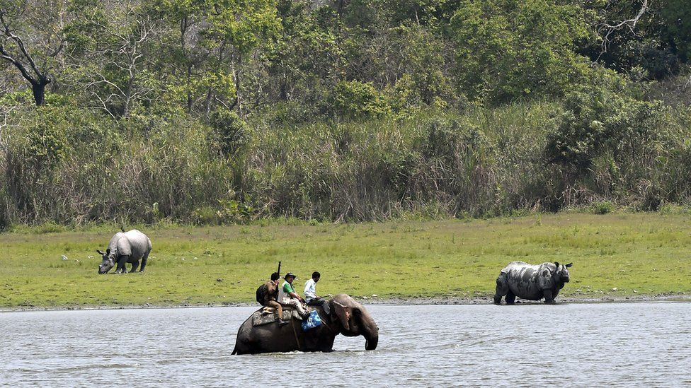 A census team wades through water on an elephant back to avoid two Indian one-horned rhinos during the census inside the Kaziranga National Park in Assam, north-east India, 26 March 2018