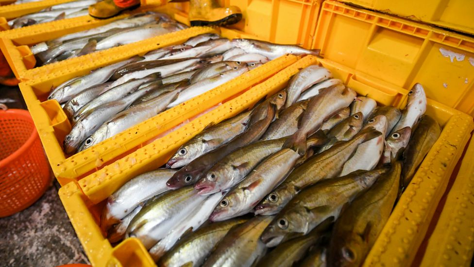 Fish in crates