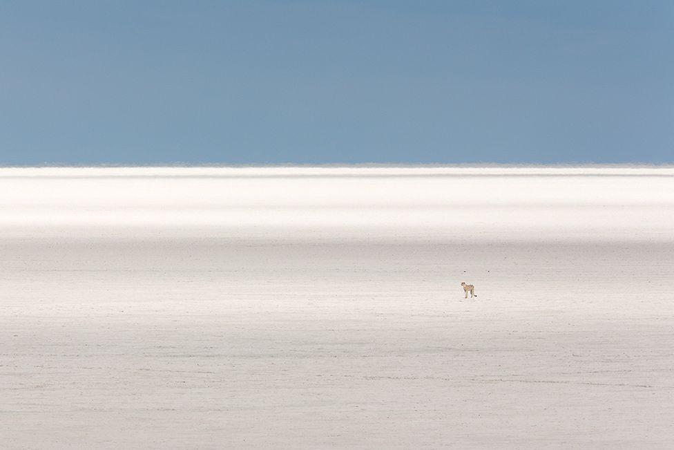 A cheetah on a wide-open plain