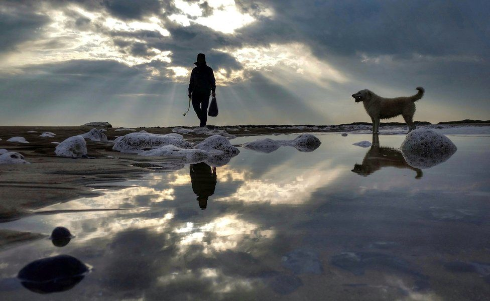 Reflections of a person with a dog on a beach