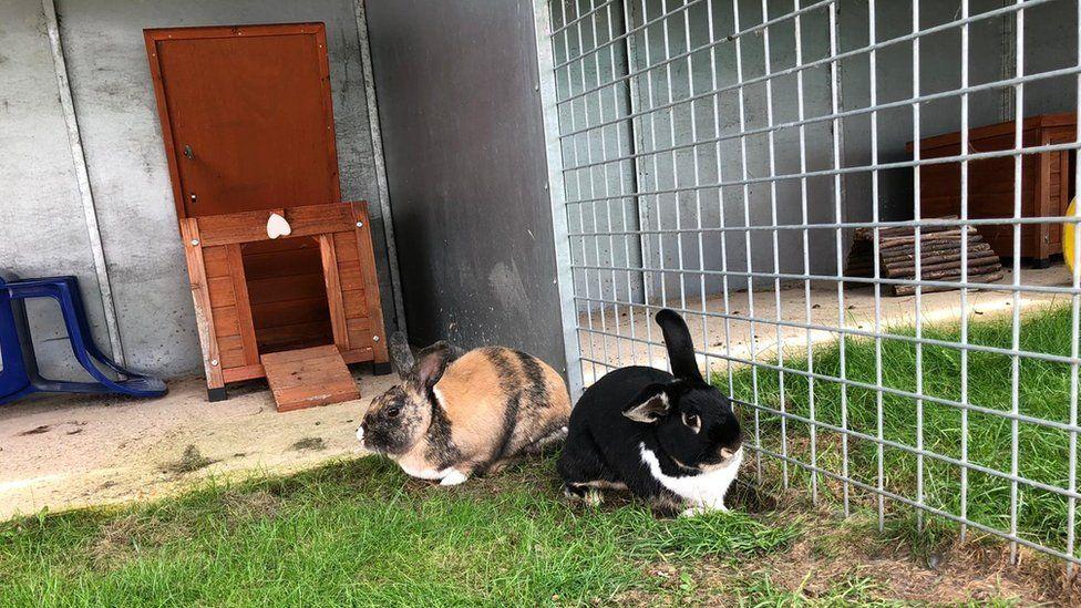 rabbits in the hutch