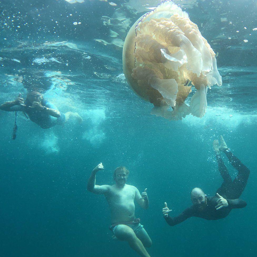 Nadadores y la medusa