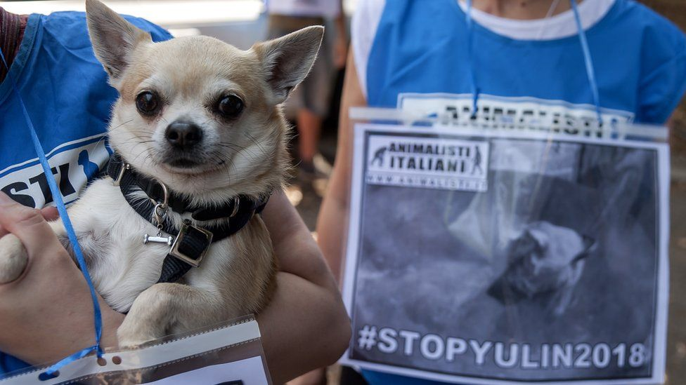 """A dog next to a """"stop Yulin 2018"""" protest in Rome against the festival"""
