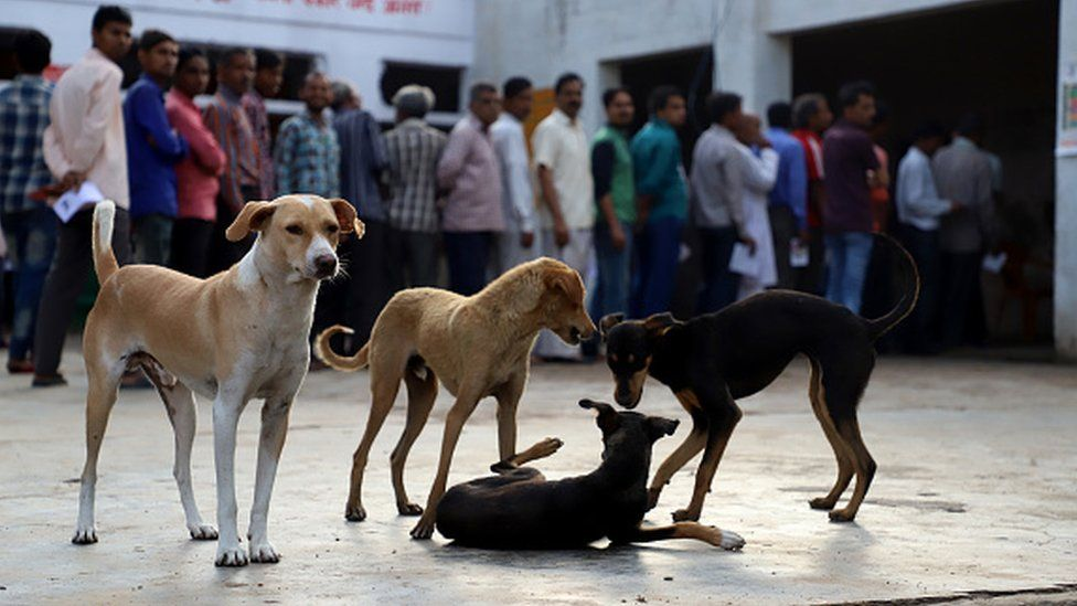 Stray dogs are seen inside a polling station in Agra Uttar Pradesh