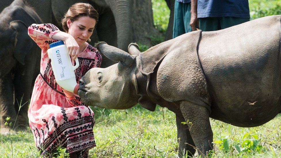 rhino poaching in assam essay