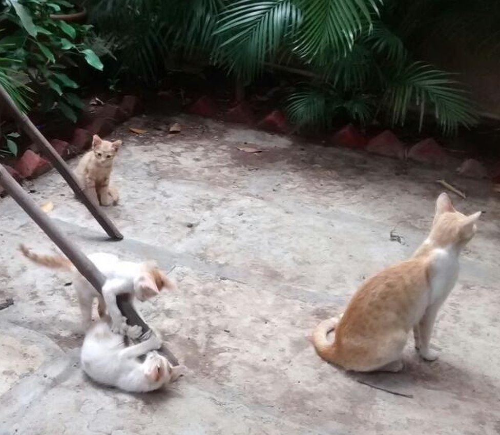 Cats gather in a garden