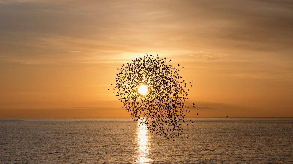 Flock of birds flying into sunset