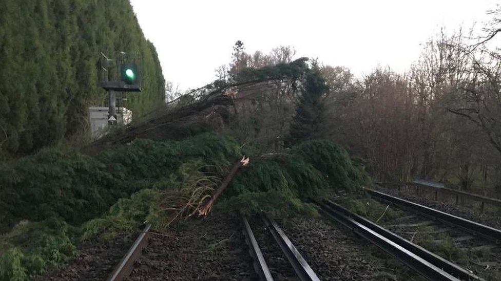 A tree on the train line between Dorking and Horsham