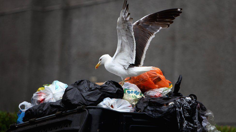 Seagull in the bin