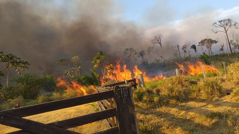 Fire burning in a land plot