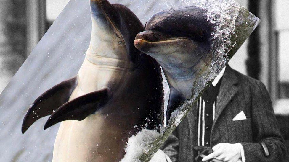 дельфин-человек