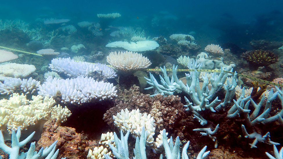 """An undated handout photo received from ARC Centre of Excellence for Coral Reef Studies on April 19, 2018 shows a mass bleaching event of coral on Australia""""s Great Barrier Reef."""