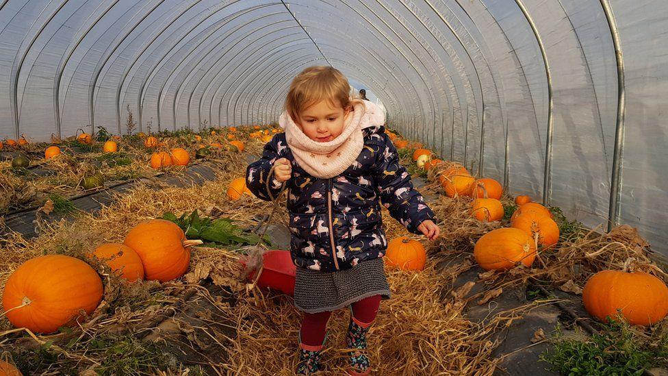 Bryony picking pumpkins in Auchterarder