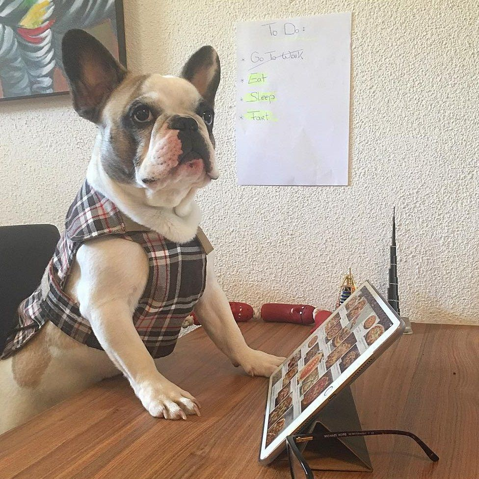 A French bulldog stands in front of an iPad with pizza on it.
