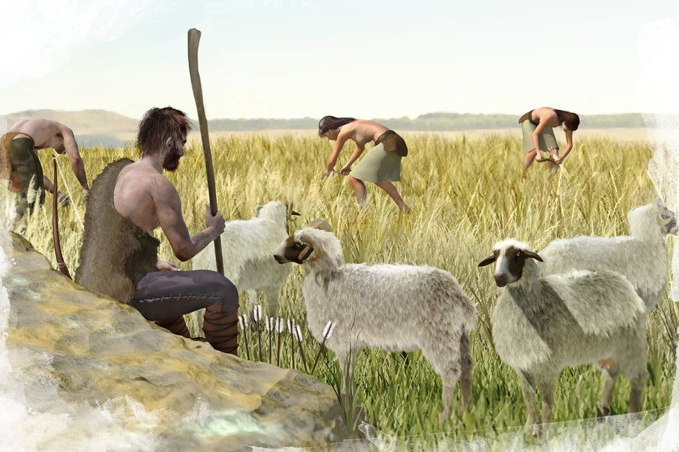 A depiction of men and women from a Stone Age culture harvesting grain crops and herding sheep.