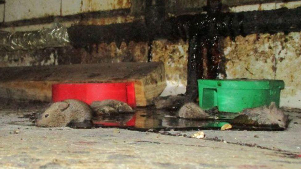 Dead mice at a takeaway in Walthamstow