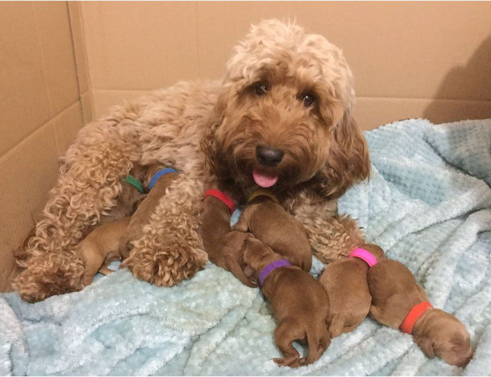 A dog with her puppies