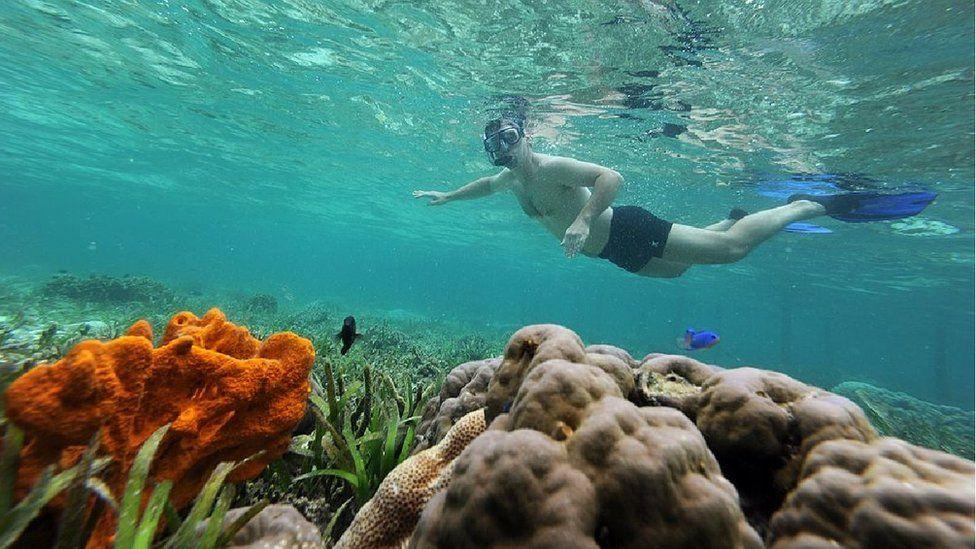 Scuba diver at Raja Ampat before the incident
