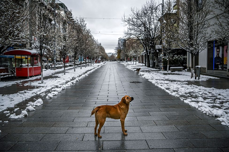 A stray dog stands on a snow-covered deserted square