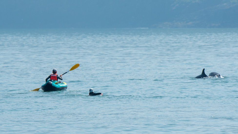 Photograph taken of the incident: Kayak and woman in water near dolphins