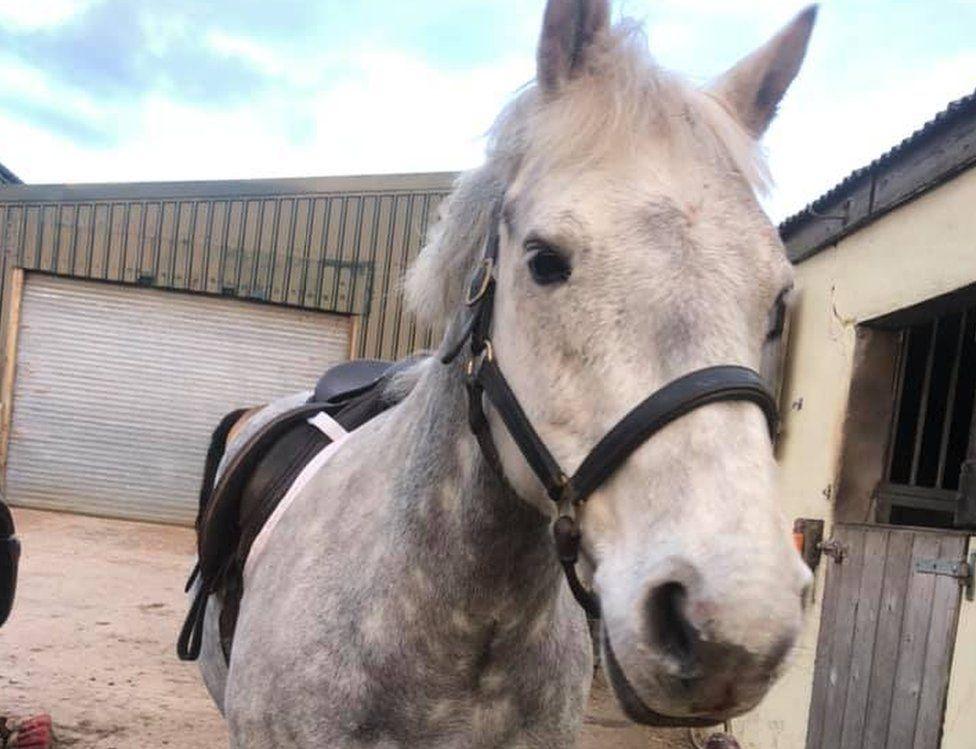 Bertie the horse