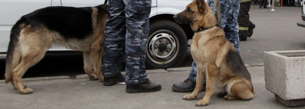 File pic of Russian police dogs